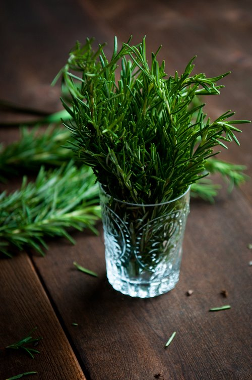 Herb garden, grow rosemary from clippings