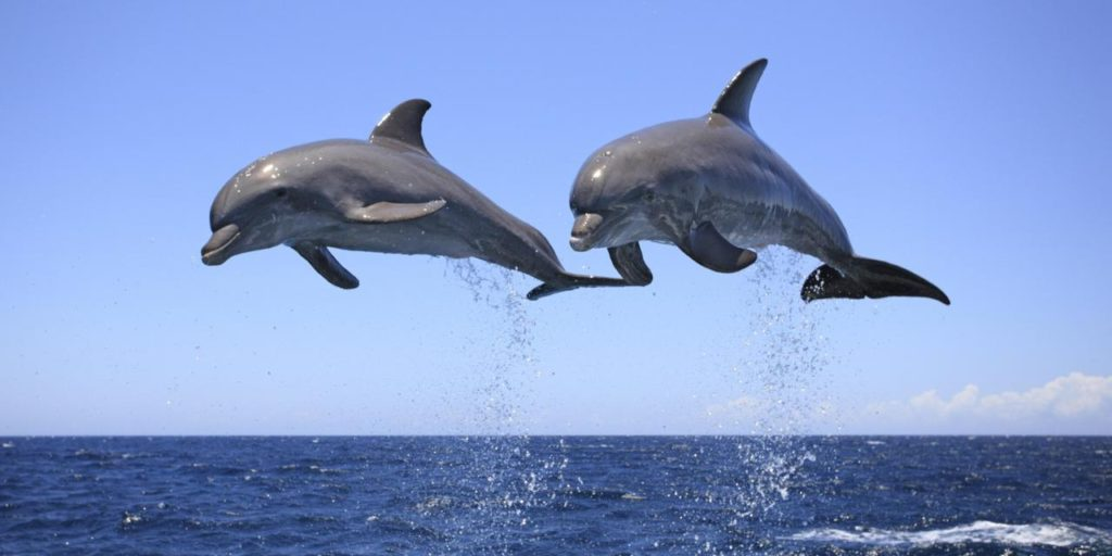 Dolphins : Are they smarter than us?