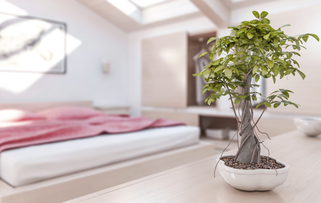 Indoor Plants Help You Sleep Better at Night