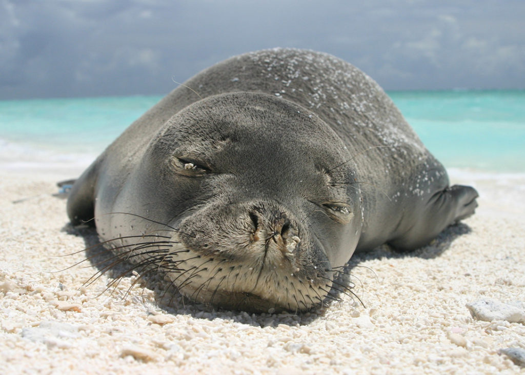 The Hawaiian Islands, USA world's best island for wildlife