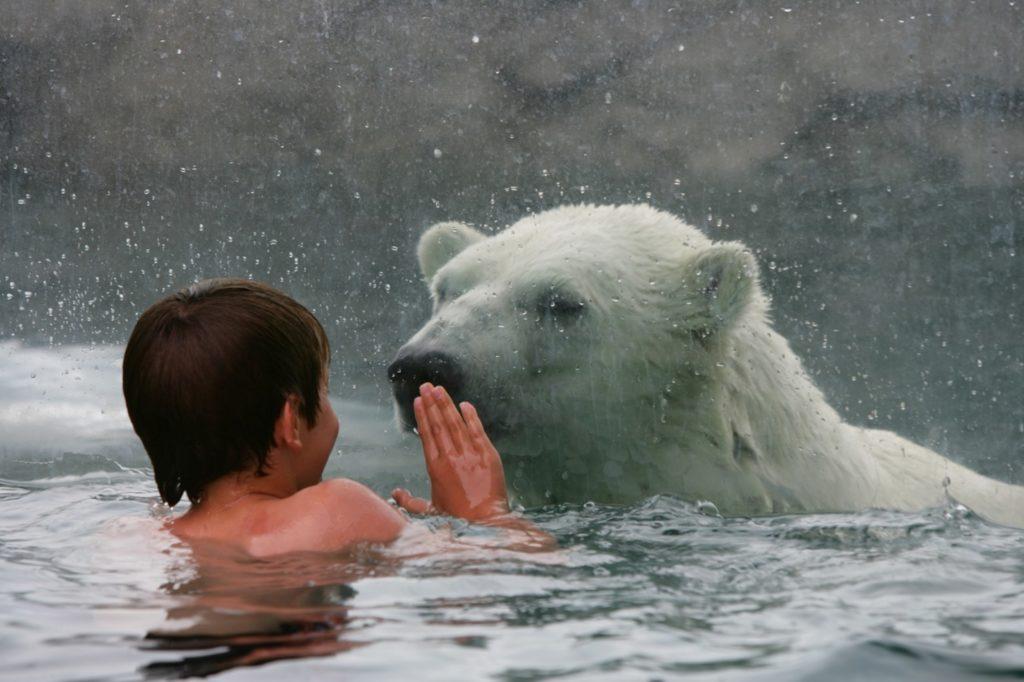 Polar Bear Habitat in Cochrane, Ontario, Best place in Canada for Holidays